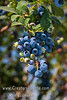 Photo taken at Blueberry Field Day hosted by UC Extension at Kearney Agricultural Research & Extension Center, Parlier, CA