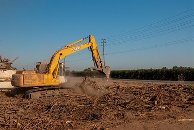 Orchard Removal - using a tub grinder to turn left over walnut branches and roots into chips. Photo from walnut field on south east corner of Road 132 and Avenue 272 near Visalia, CA