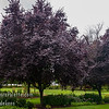 "Photo taken at the J.F. Schmidt Arboretum in Boring, Oregon <a target=""_blank"" href=""http://www.jfschmidt.com"" title=""J.F. Schmidt "">J.F. Schmidt</a>"