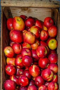 Arkansas Black Apple in bins at an Organic Apple Farm in Philo, California.