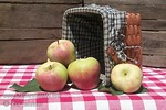 "Gala Apple (Kidd's D-8) - Malus sp. : These photo galleries have been provided to allow Nurseries and other plant enthusiasts obtain quality photos for your websites and printed publications.  Only you know the look and feel you want to obtain, so it is best that you select the photos that work best for your application as opposed to a L.E. Cooke Co staff person choosing for you.  Select the photo, click on ""buy this photo"" then select ""Downloads"".  There is a nominal cost for the file to support this website."