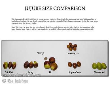 Jujube Size Comparison