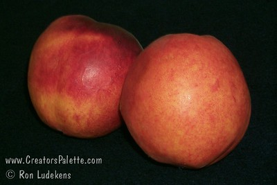 Fantasia Nectarine - prunus persica var. nucipersica Very large, freestone.  Bright red with bright yellow inder-color.  Flesh is yellow, firm and smooth textured.  Good quality, sweet and juicy.  Bears well in warmer winter areas (low chill).  Also frost tolerant.  Ripens: Mid to Late July.