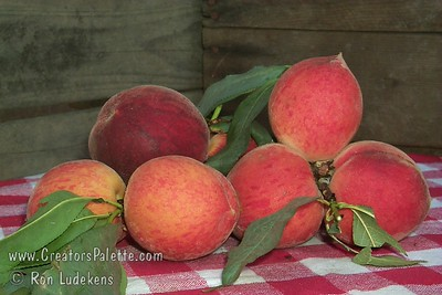 Desert Gold Peach - Prunus persica Medium sized.  Yellow skin with red blush.  Firm, good quality, yellow flesh.  Semi-freestone. Sets very heavy.  Excellent for low desert areas.  Ripens late April to Mid-May.  Requires 300-400 hours chilling.