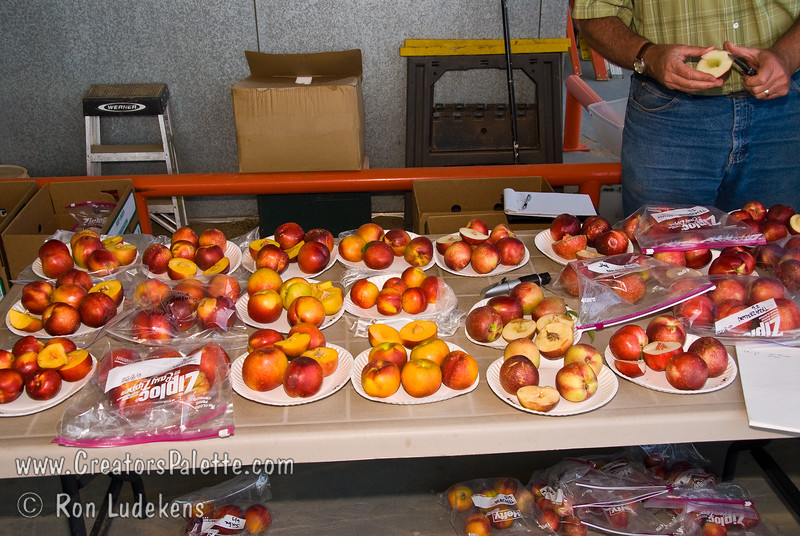 Peach and Nectarine evaluation 6-14-2008.