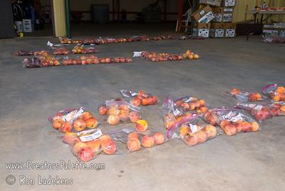Peach and Nectarine evaluation 6-14-2008.