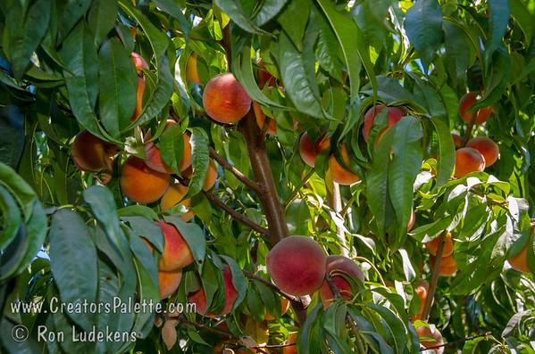 Heavy Fruit Set