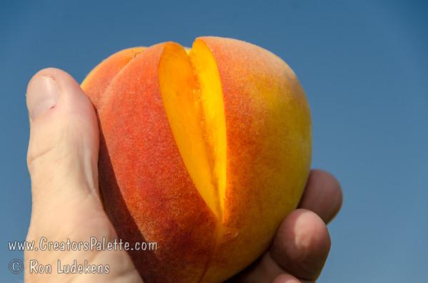 Tropi-Berta Peach in hand