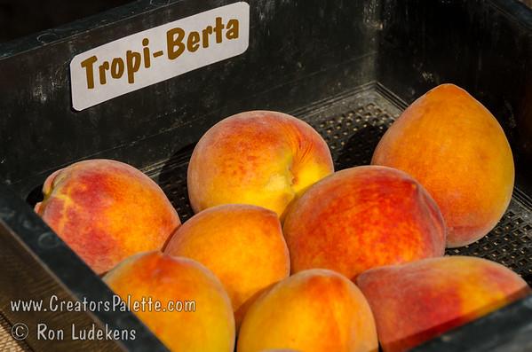 Tropi-Berta Peach