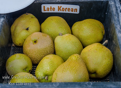 Late Korean Pear (Okusankichi) - Pyrus pyrifolia sp.   Large, round. Green to tan russeted, thick, somewhat bitter skin. White, slightly tart, refreshing, firm, coarse, crisp and juicy flesh. Keeps well after picking. Flavor improves with storage. Ripens: Late August to early October. 600 hours chilling. Cold hardy USDA Zone 5.