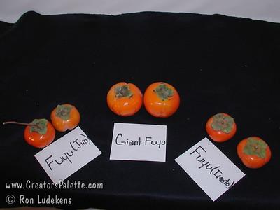 Fuyu (various) Persimmon comparison photo (Diospyros kaki) Fuyu (Jiro), Giant Futu, Fuyu (Imoto)