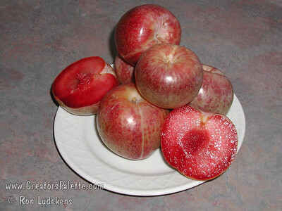 Dapple Dandy Plumcot (Prunus armeniaca x P. x domestica sp.) Uniquely colored fruit with pale green to yellow skin with distinctive red dots.  Flavorful, creamy, pinkish-red flesh with plum-apricot flavor.  Pollinizer required such as Flavor Queen, Flavor Supreme Plumcots, Santa Rosa or Burgundy plums. Freestone. Ripens: August. Requires 4-500 hours chilling below 45º F.  Cold hardy to U.S.D.A.  Zone 7.