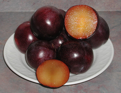Beauty Plum (Prunus salicina sp.) Large. Amber flesh tinged with red. Strong vigorous grower. One of the best early plums. Ripens: Early June.