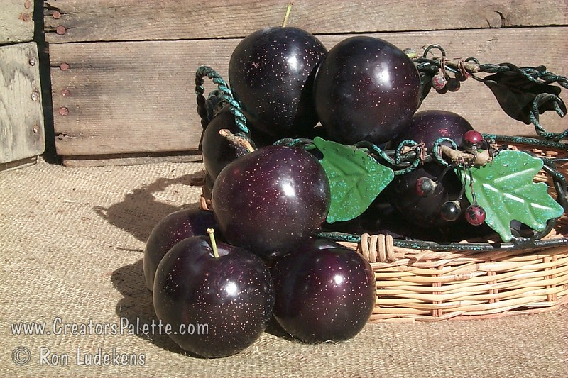 Burgundy Plum - Prunus salicina sp.<br /> Of the red fleshed Japanese Plums, this is my favorite.  It is self-fertile which eliminates the need for another tree to pollinate it.  The fruit holds well on the tree giving a month of great taste.  Medium sized fruit.  Reddish-purple skin.  Flesh deep red, mellow, sweet.  Small pit.  A cross of Mariposa and El Dorodo.  Good for mild winter areas, yet cold hardy.  Ripens early July but keeps on the tree until Mid August.  Requires less than 350 hours chilling.