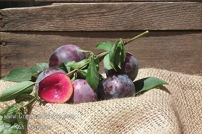 A medium to large plum with purplish skin and amber flesh tinged with red.  Delicious flavor.  Self fertile.  Ripens in Early June in central California.  Requires only about 250 hours chilling.