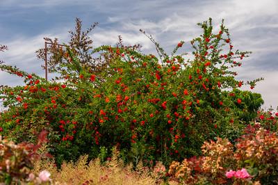 Image taken at Bravo Lake Botanical Gardens 6-11-11 during berry tasting day.