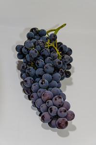 Thomcord Grape - picked with David Ramming - USDA ARS breeding program.