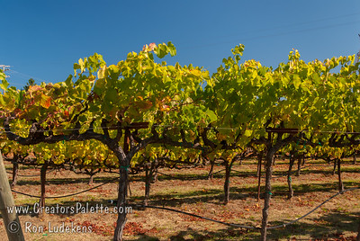 Image taken at Handley Cellars, Philo, CA