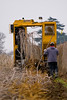 GK Tree Digger harvesting Teas Fruiting Weeping Mulberries (Morus alba 'Pendula') at L.E. Cooke Co.  Notice trees are laid on the ground with the roots shaken free of soil.  One worker walks behind digger to make sure trees all fall one direction so they do not get in the diggers path for digging the next row.