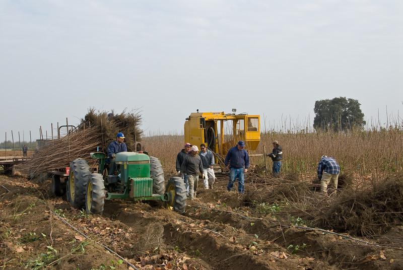Digging Persimmon trees 11-30-2007