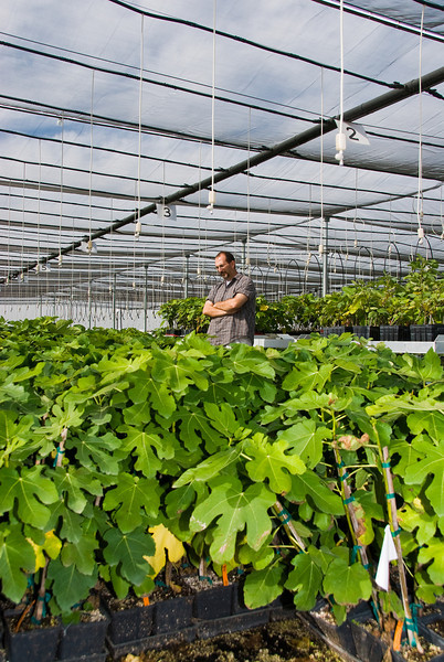 "Lloyd Cassidy (sales representative) reviewing Figs in 5.5"" Pots"