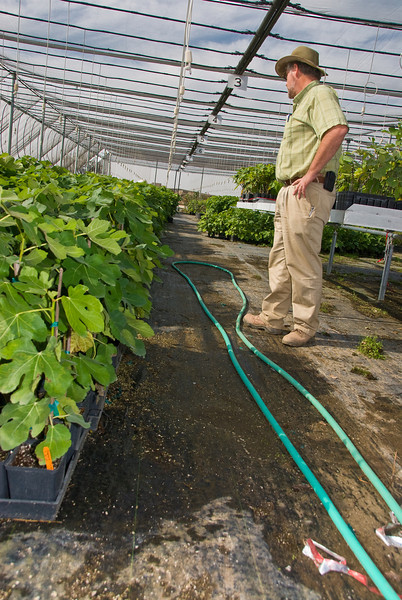 "David Cox (GM) Reviewing Figs in 5.5"" Pots"