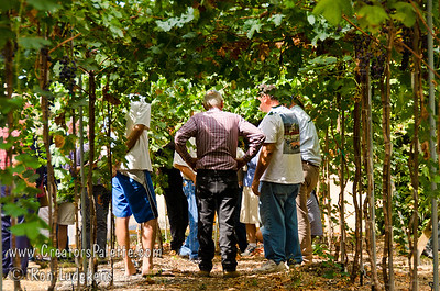 Walking under the canopy of grapevines. Image taken at Walter and Brenda Thoma's home in Porterville, CA which was hosting the local chapter of the California Rare Fruit Growers.