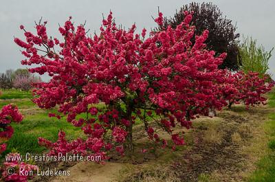 Natural Dwarf Fruit Trees Histories