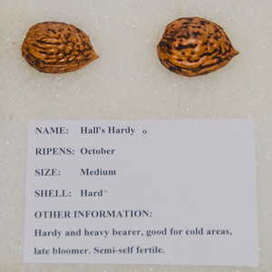 Image taken from nuts stored in L.E. Cooke Nut Display Case