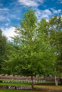 Photo taken at the J.F. Schmidt Arboretum in Boring, Oregon J.F. Schmidt
