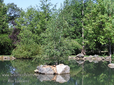 Birch trees on island in pond at Aquatic Park - Paradise 1