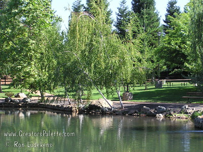 Birch trees near pond at Aquatic Park - Paradise 2