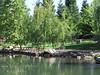 Birch trees near pond at Aquatic Park - Paradise 2