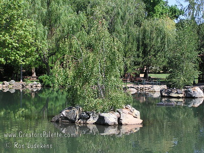 Birch trees on island in pond at Aquatic Park - Paradise 2