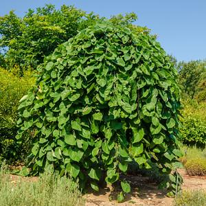 Image taken at U.S. National Arboretum - Washington, DC