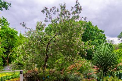 Image taken at Dallas Arboretum 5-12-2012