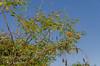 20120615-_DSD3152