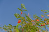 20120615-_DSD3157