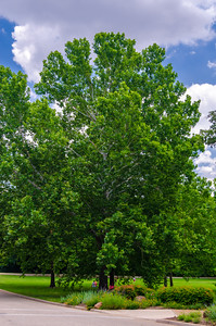 Image taken at Fort Worth Botanical Garden 5-13-2012
