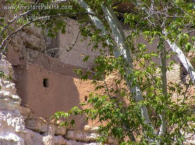 Native Arizona Sycamores in the canyon bottom in Montezuma Castle National Monument south of Sedona, Arizona.