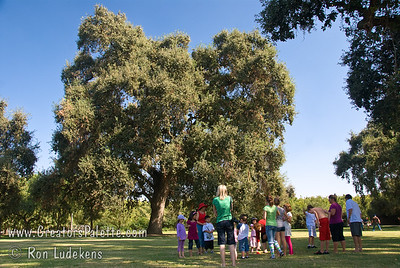 I put this image in to show scale of the huge Oak. First Pres Church Picnic at Bennetts Ranch 10-11-09