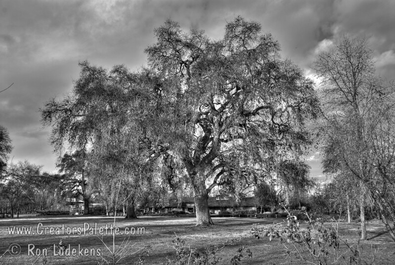 Oak Trees at Bennetts Ranch - Visalia, CA