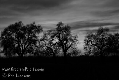 Majestic Valley Oaks silhouetted by sunset taken on 3-5-2007 at Bennetts Ranch, Visalia, CA