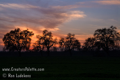 Sunset behind the Valley Oaks on 3-7-2008.  Oaks on Bennetts Ranch in Visalia, CA