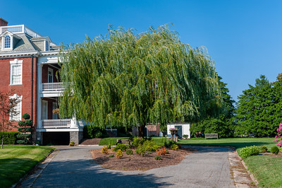 Weeping Willow at Widehall private residence in Chestertown, VA
