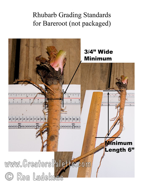 Minimum grading standards for L.E. Cooke when selling bareroot (not in packaged).