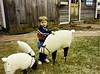 These lambs weren't too active