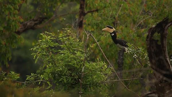 A Deeper Look into the Aggressor Safari Lodges