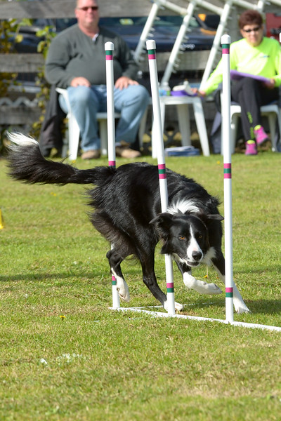 Tail's Up Agility Trial