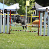 Agility Trial : 1 gallery with 56 photos
